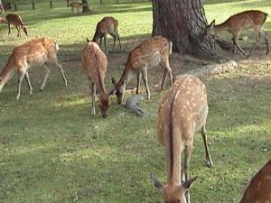Nara Park (Nara)
